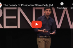The Beauty Of Pluripotent Stem Cells – Great Intro